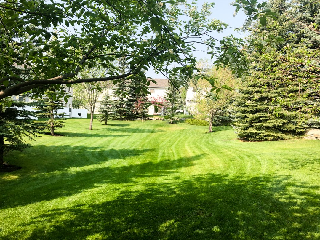 Trusted Lawn Care Calgary Pros 3